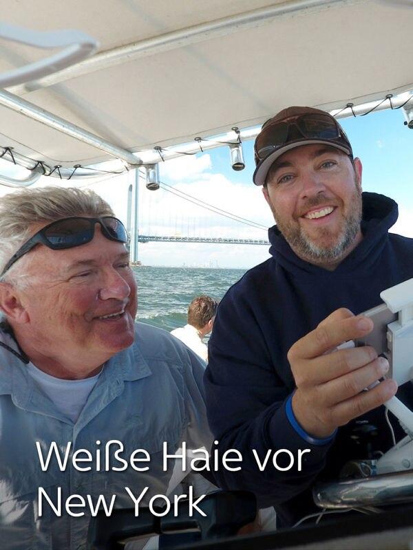 Weiße Haie vor New York