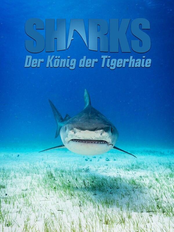 Der König der Tigerhaie