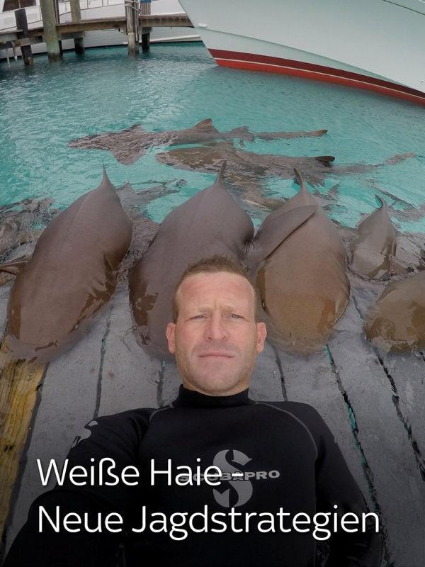 Weiße Haie - Neue Jagdstrategien