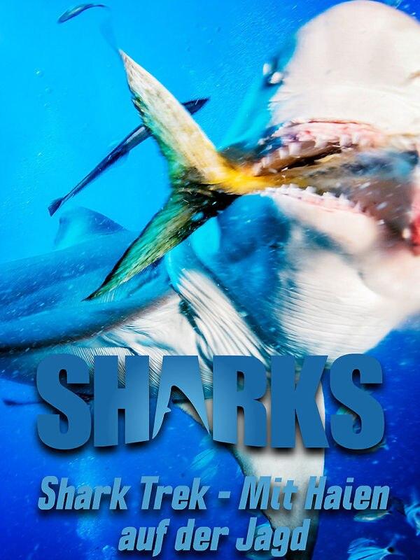 Shark Trek - Mit Haien auf der Jagd