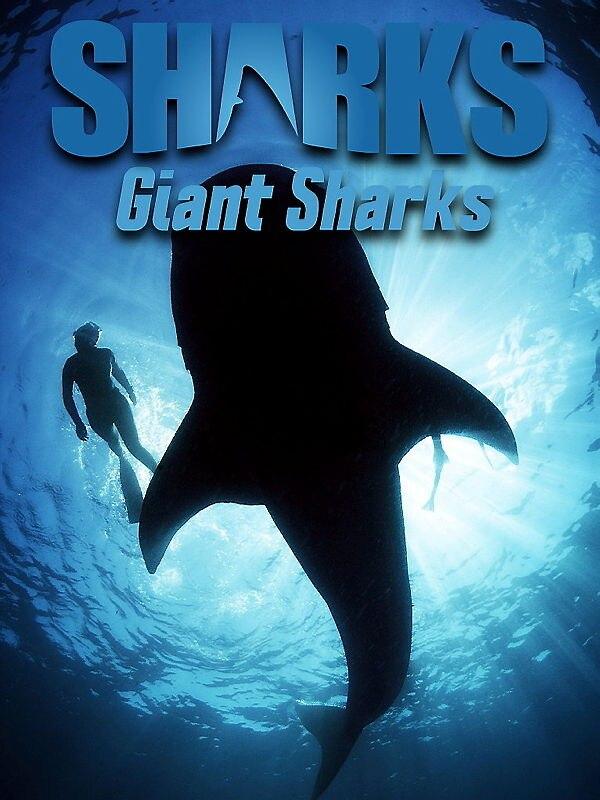 Giant Sharks - Hai-Expedition vor Kuba