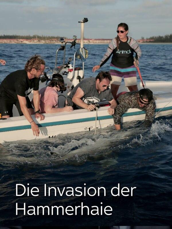 Die Invasion der Hammerhaie