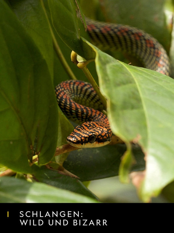 Schlangen: Wild und Bizarr
