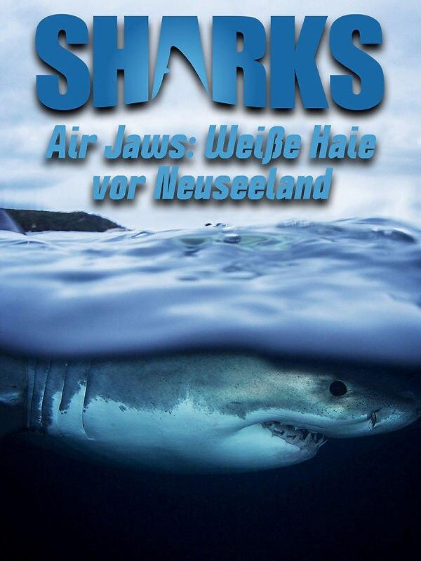 Air Jaws: Weiße Haie vor Neuseeland