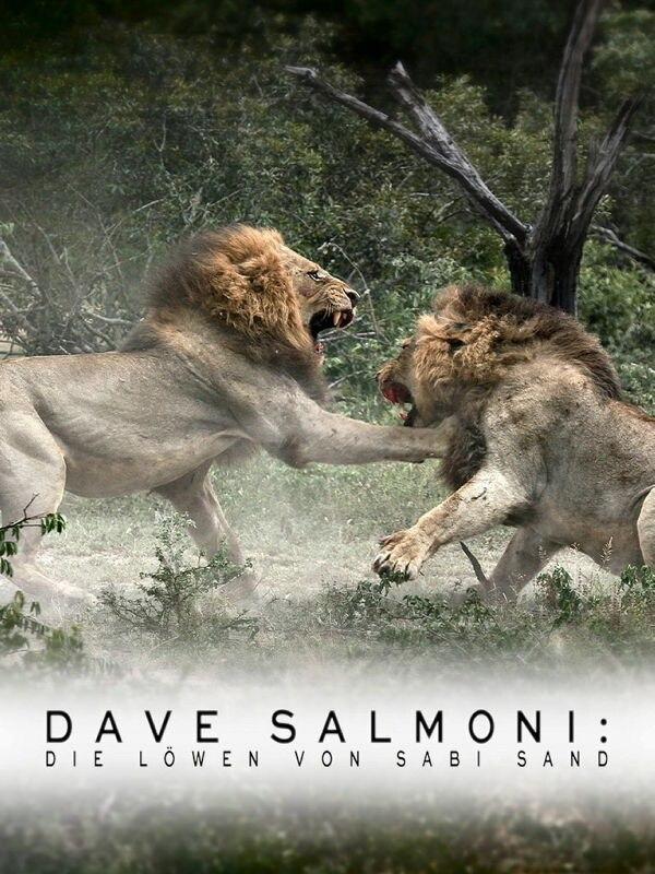 Dave Salmoni: Die Löwen von Sabi Sand