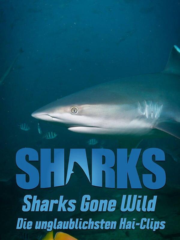 Sharks Gone Wild: Die unglaublichsten Hai-Clips