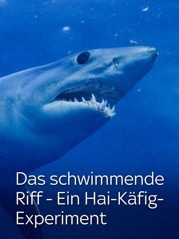 Das schwimmende Riff - Ein Hai-Käfig-Experiment