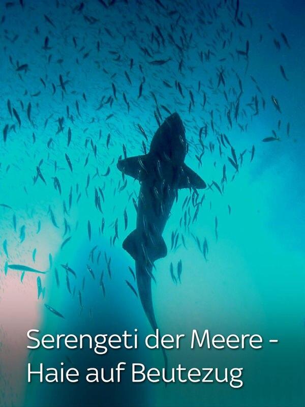 Serengeti der Meere - Haie auf Beutezug