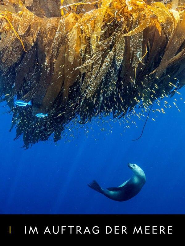Im Auftrag der Meere
