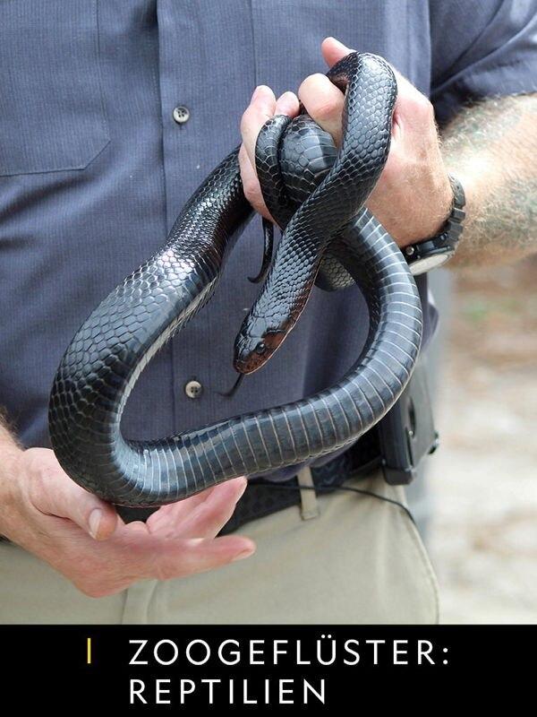 Zoogeflüster: Reptilien