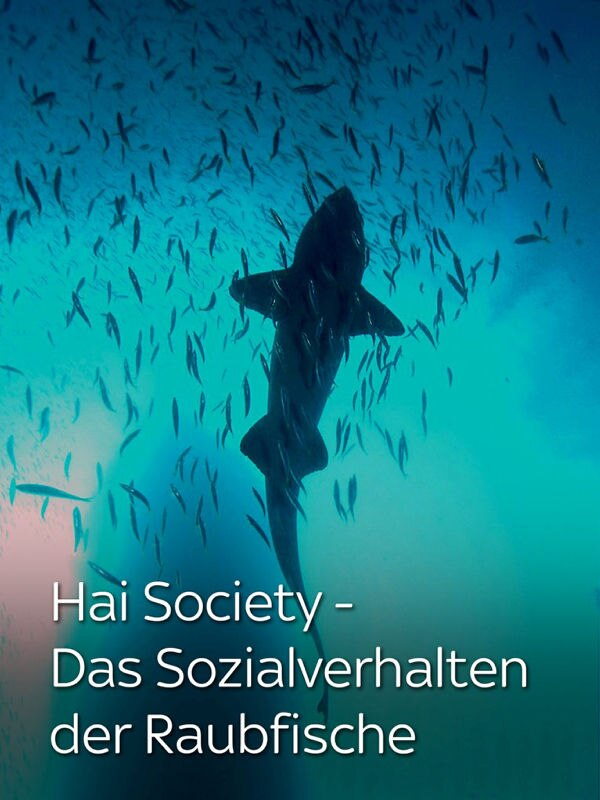 Hai Society - Das Sozialverhalten der Raubfische