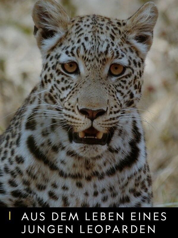Aus dem Leben eines jungen Leoparden