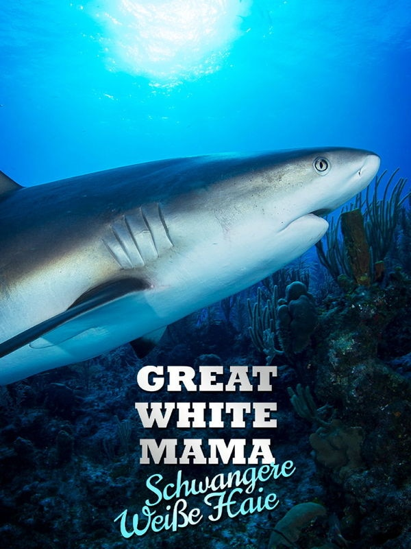 Great White Mama: Schwangere Weiße Haie