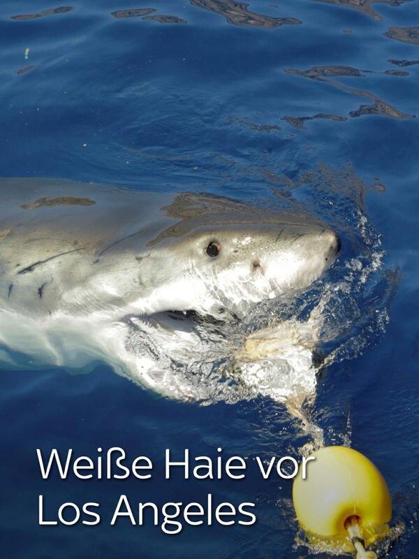 Weiße Haie vor Los Angeles