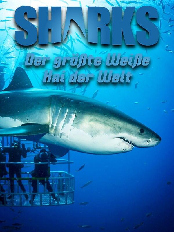 Der größte Weiße Hai der Welt