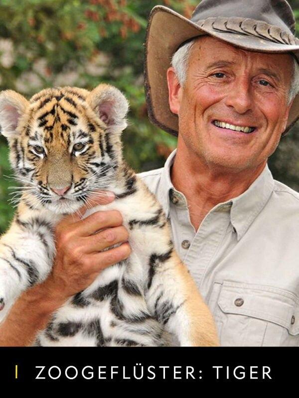 Zoogeflüster: Tiger