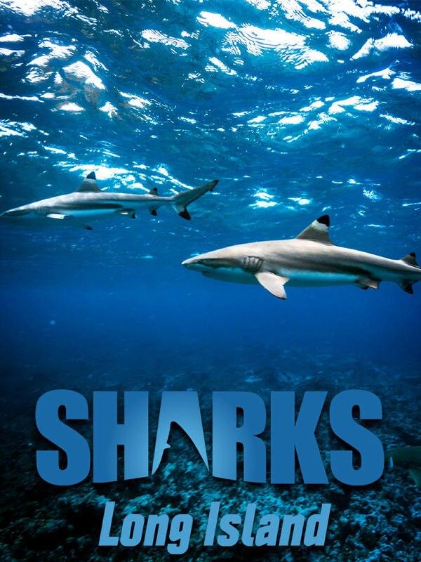 Long Island: Hotspot der Haie
