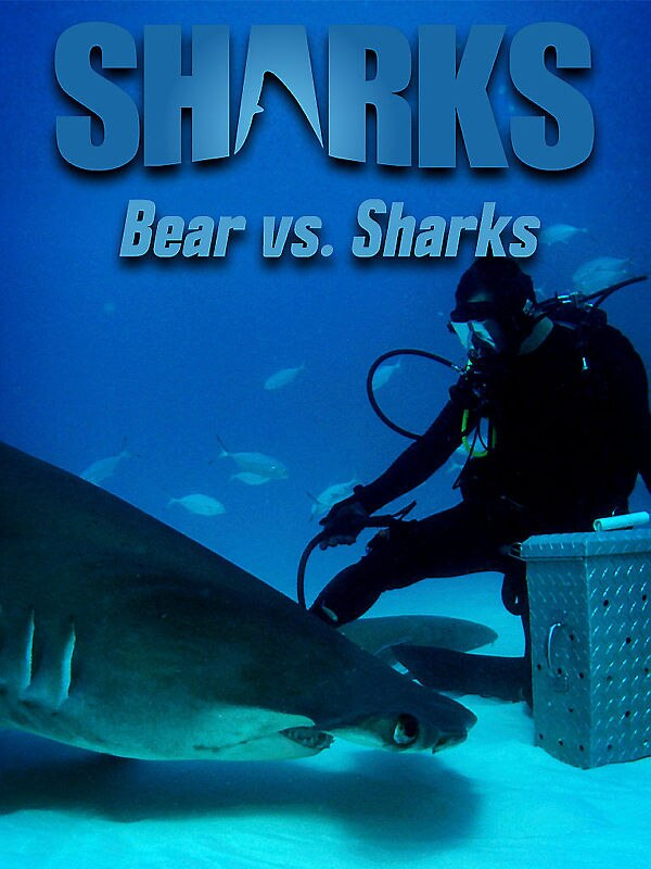 Bear vs. Sharks - Ausgesetzt im Bermuda-Dreieck