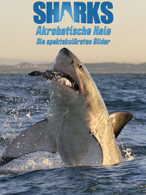 Akrobatische Haie: Die spektakulärsten Bilder