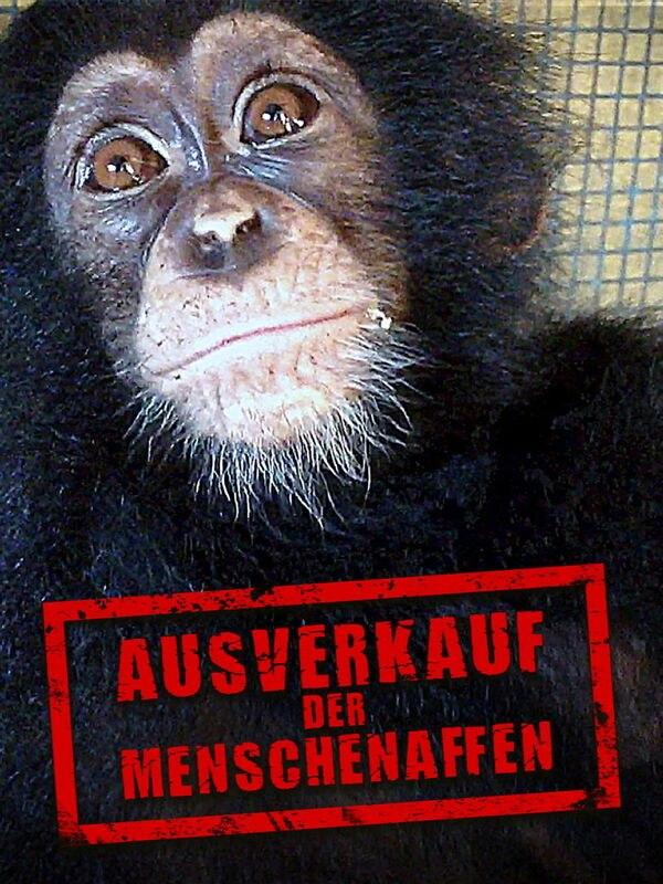 planet e.: Ausverkauf der Menschenaffen